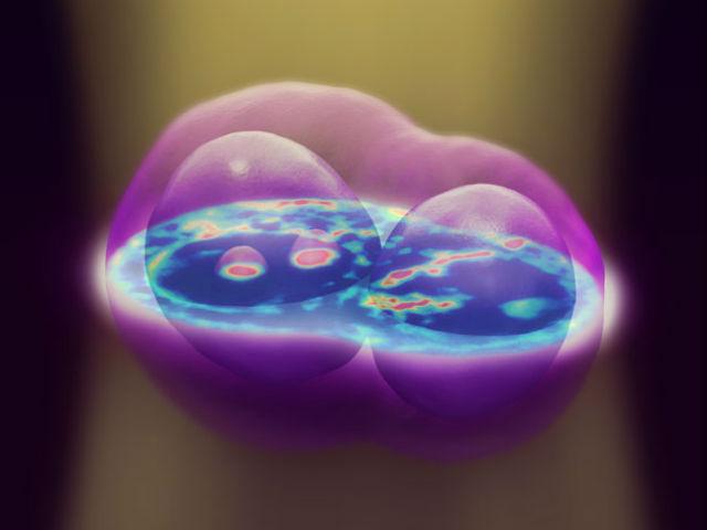 Исследователи объединили 140 снимков продольной проекции клетки эпителия кишечника с разным фокусным расстоянием для создания трёхмерной модели
