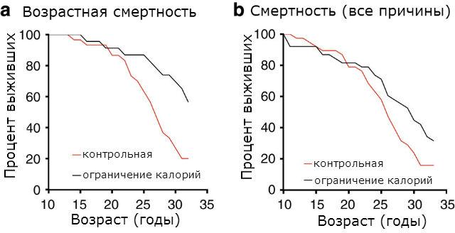 Графики иллюстрируют смертность, по причинам, связанным с возрастом (слева) и по всем возможным причинам в двух группах макак