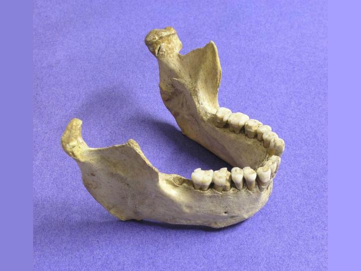 Анализ останков и каменных артефактов уточнил сроки исчезновения неандертальцев