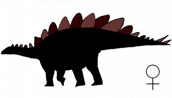 Так, по мнению Эвана Сэйтты, выглядела самка стегозавра