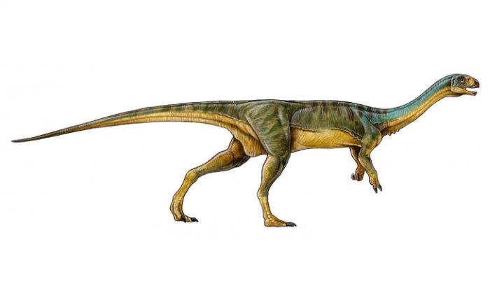 Будучи родственником тираннозавров и велоцирапторов чилизавр отличался от них длинной шеей, маленькой головой, строением зубов и наличием необычного клюва