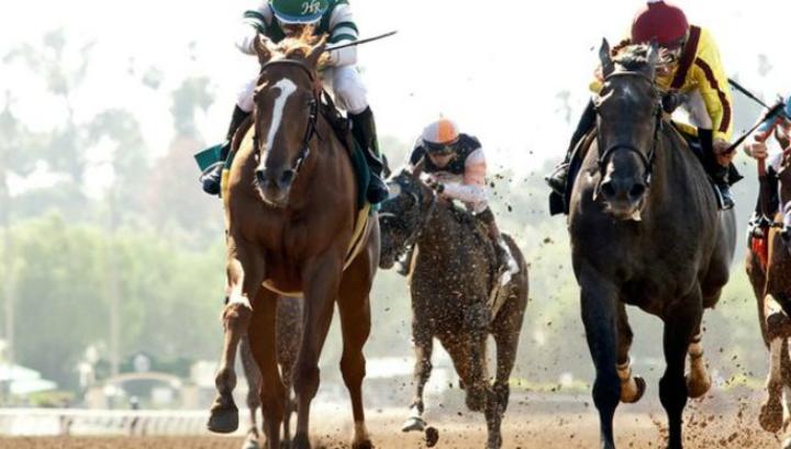 Биологи утверждают, что скаковые лошади ещё не достигли своего эволюционного предела скорости