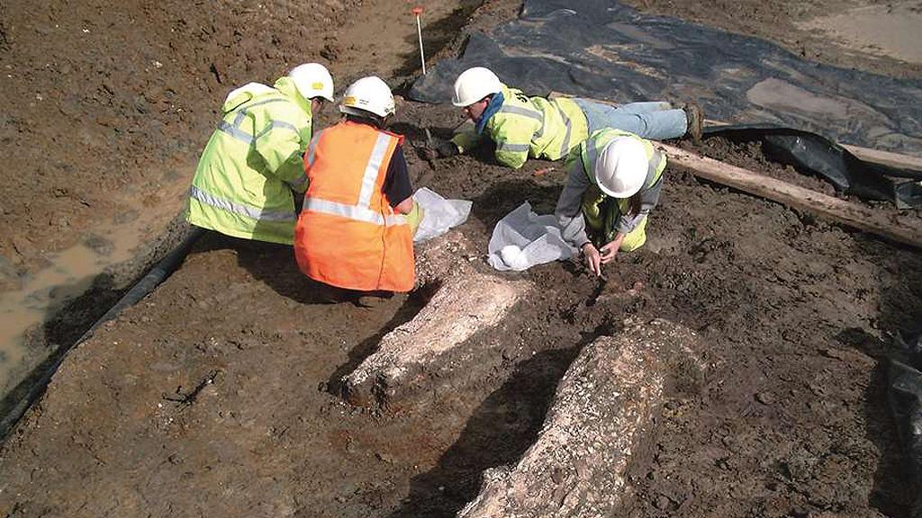 Останки ископаемого слона, убитого 420 тысяч лет назад. Найдены при строительстве магистрали HS1 Фото: Historic England