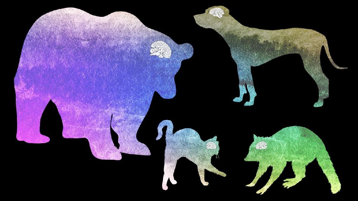 Для чистоты эксперимента специалисты изучили мозг домашних и диких животных разных размеров.