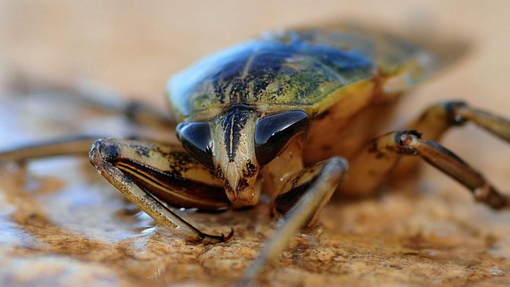 Последний общий предок таракановых обитал на планете 235 миллионов лет назад.