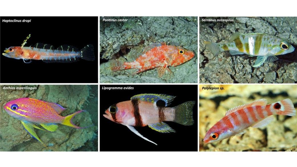 Сумеречная зона Карибского моря поразила учёных своим биоразнообразием.