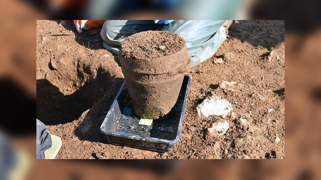 Керамическая погребальная урна, найденная возле Лу. Фото: ANU