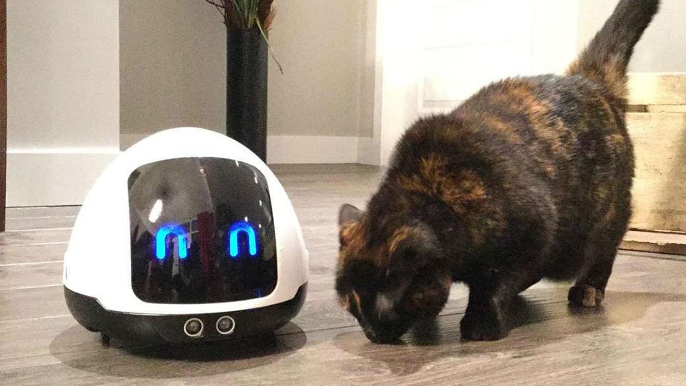 Новый робот сможет самостоятельно угостить собаку.