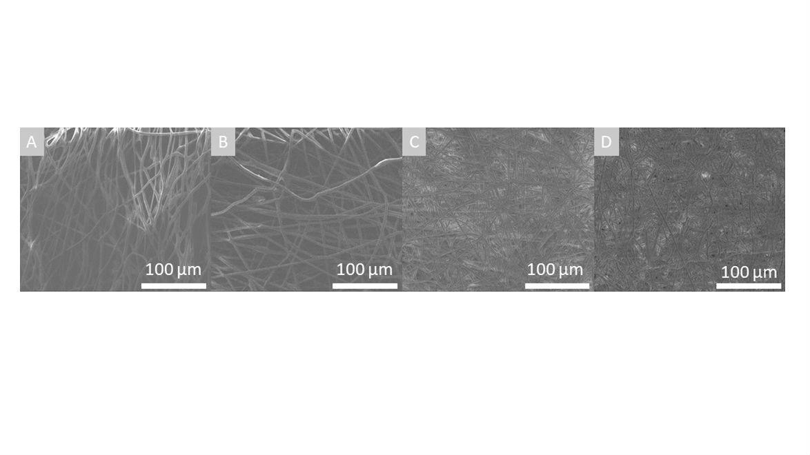 Изображения сканирующей электронной спектроскопии поверхности скаффолдов на основе чистого полигидроксибутирата (А), с 1 % (B), 2 % (C) и 3 % (D) содержанием полианалина.