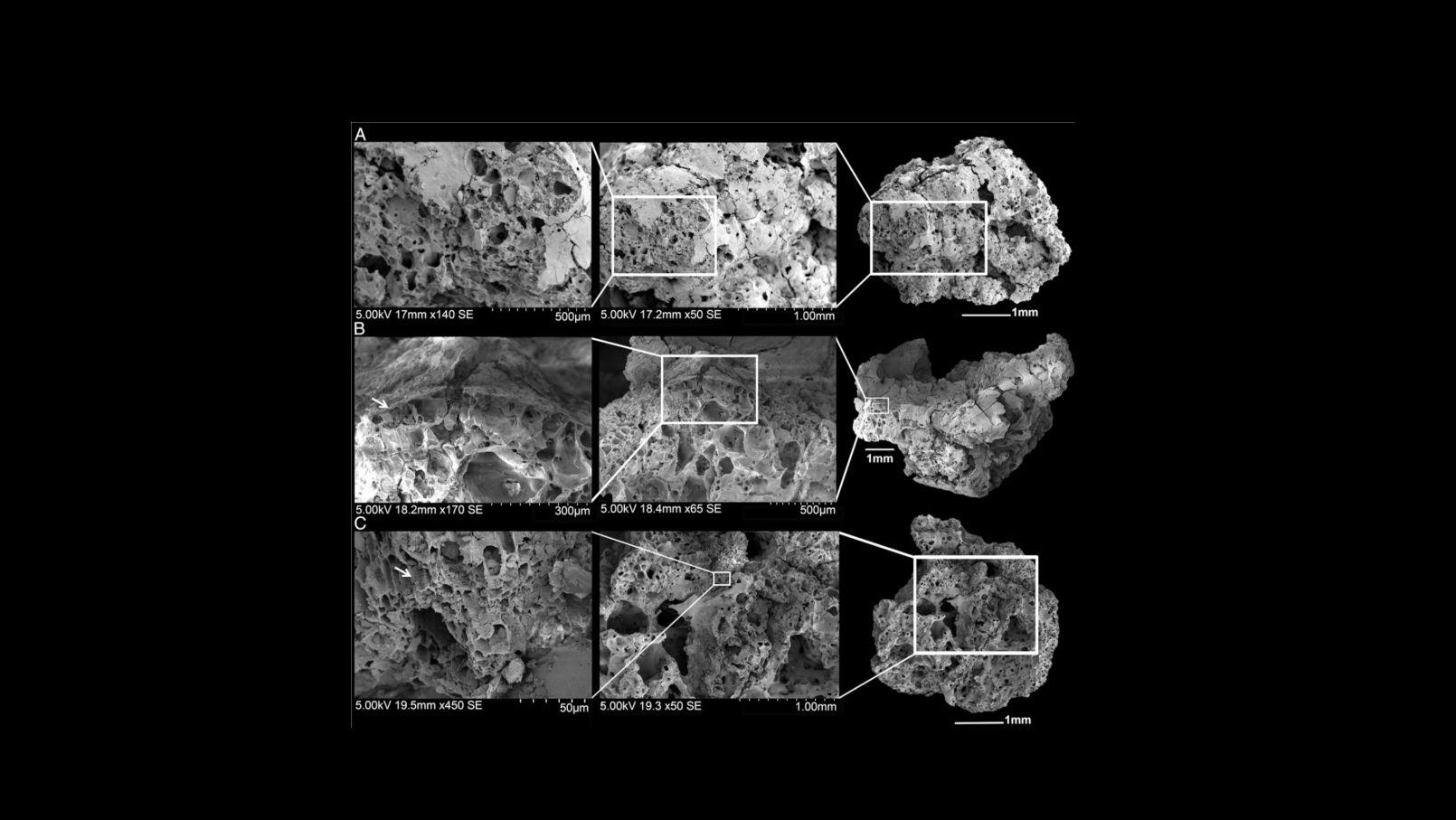 РЭМ-изображение хлебоподобных остатков, найденных на месте раскопок Шубайки 1.