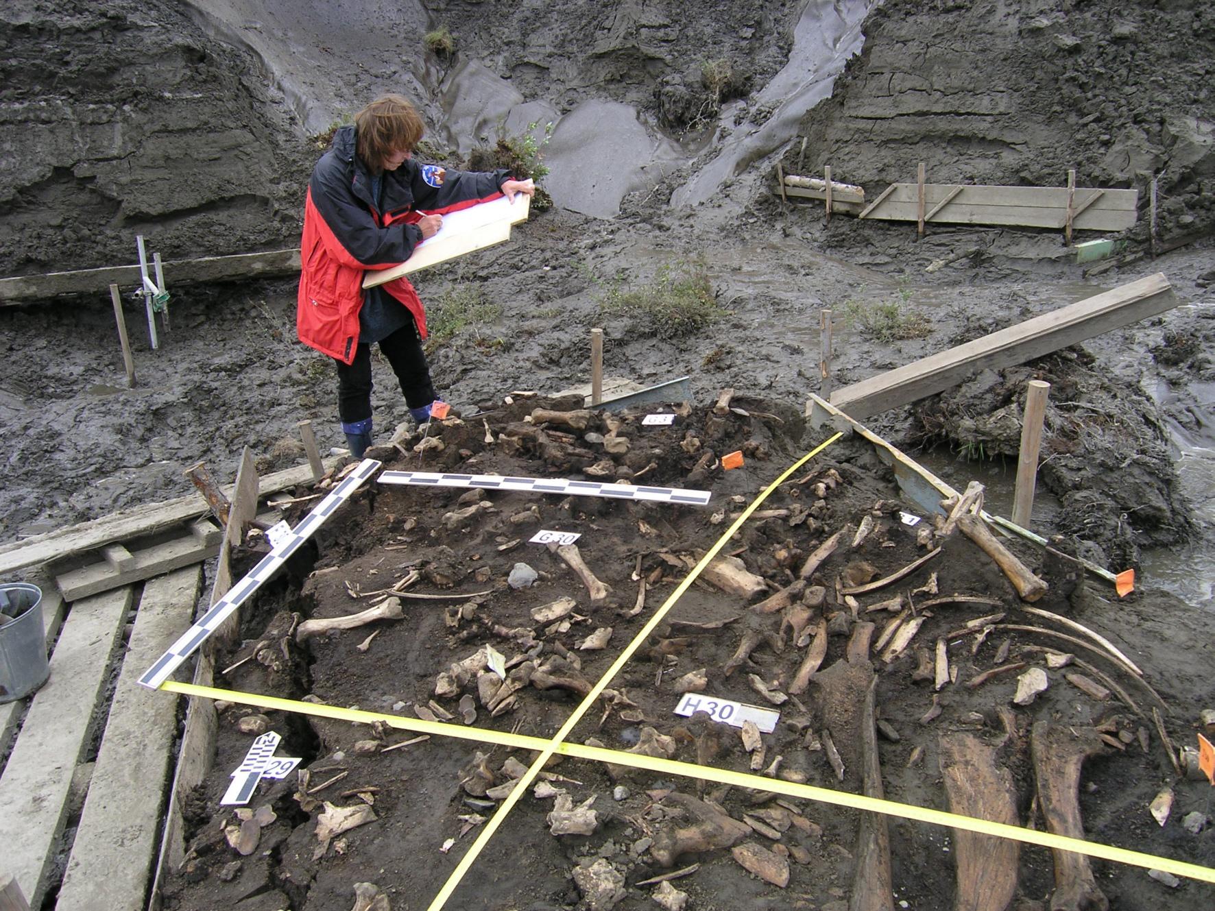 Участок, где были найдены зубы древнего человека, Янская стоянка