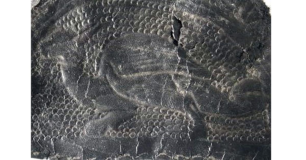 Обрывок кожи с тиснением дракона-виверны. Фото: Minster FM