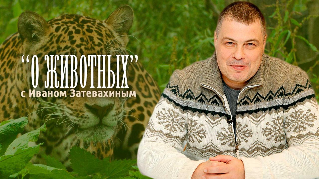 О животных. С Иваном Затевахиным.
