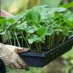 Про урожай и рассаду