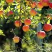Суперинтенсивные сады появятся еще в 11 округах Ставрополья