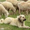 Найдена формула расчёта возраста собаки в сравнении с человеком