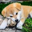 Кости для собак: польза и вред