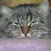 Начало календарной весны в России — это еще и День кошек!