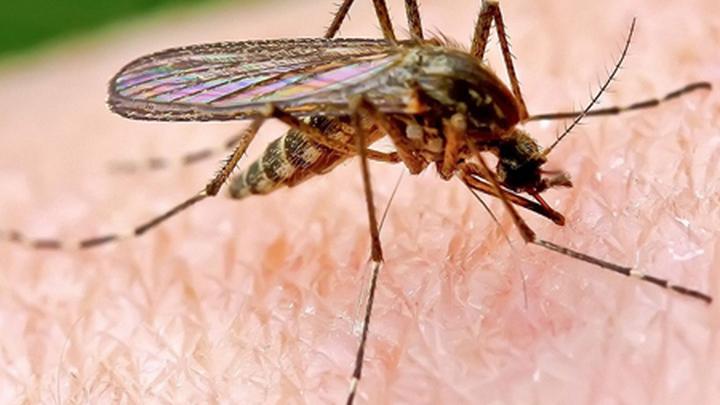 Комариный укус.