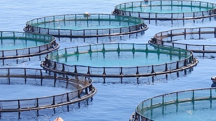 Искусственное разведение рыбы в открытых водоёмах.