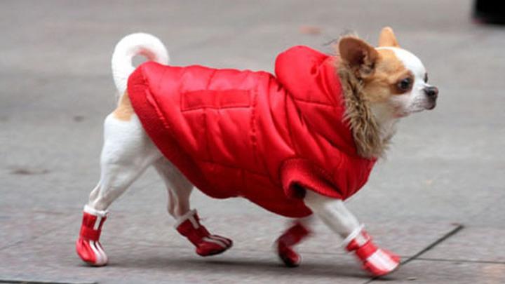Собачья одежда.