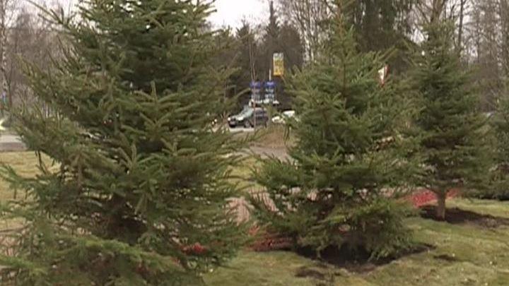 С мемориала памяти жертв катастрофы над Синаем украли шесть елок