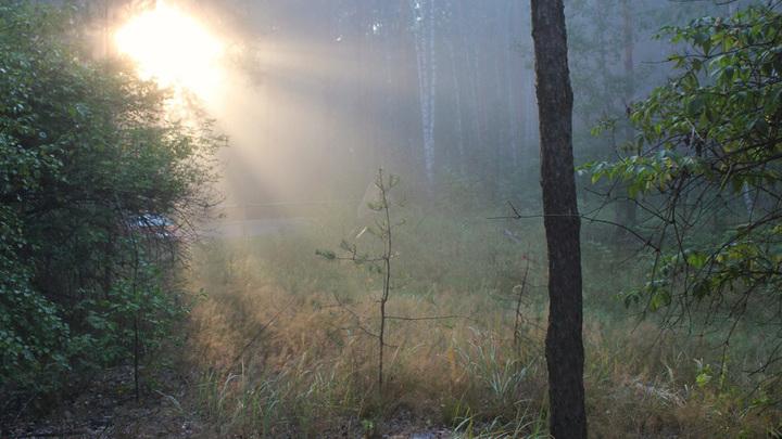 Утро близ Шилово и Тимошкино, у пьяного леса.