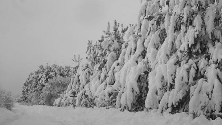 Хвойные деревья Скандинавии пережили последнюю ледниковую эпоху