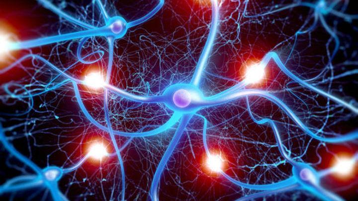 Подробная карта экспрессии генов в нейронах поможет установить их функции.