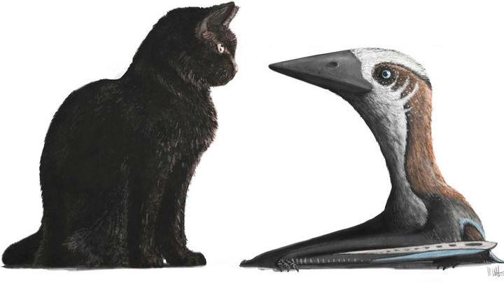 Сравнение птерозавра с современным котом.