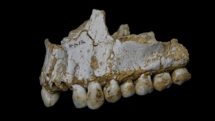 Остатки зубного камня помогли учёным понять, что неандертальцы при жизни употребляли в пищу.