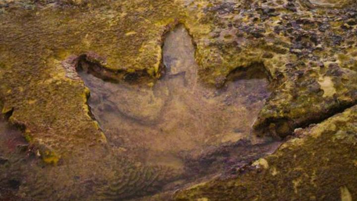 Следы с западного побережья являются древнейшими местными образцами.