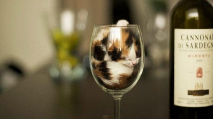 Учёные выяснили, когда кошку можно считать твёрдой, когда √ жидкой, а когда √ даже газообразной.