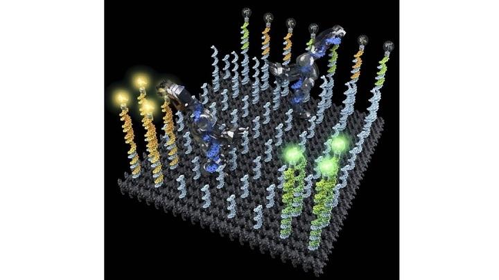 ДНК-робот в представлении художника: нанотруженик собирает флуоресцентные молекулы и доставляет в пункты назначения.