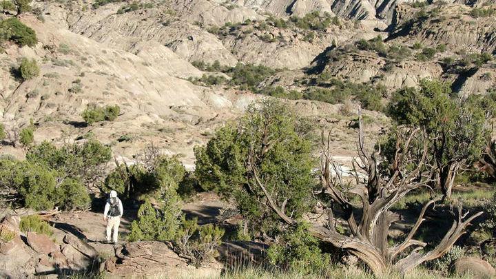 Место в штате Юта, где были найдены древние фекалии динозавров, содержащие фрагменты ракушек.