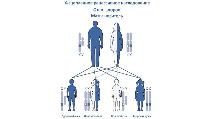 Наиболее частый случай X-сцеплённого рецессивного наследования: от матери, которая является носителем, при здоровом отце.