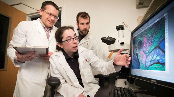 """Разоблачением """"мышечного рака"""" руководили (слева направо) Марк Хэтли (Mark Hatley), Кэтрин Драммонд (Catherine Drummond) и Джейсон Ханна (Jason Hanna)."""