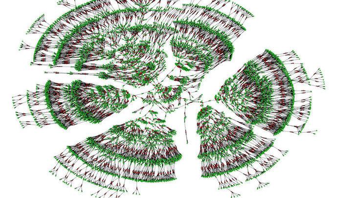 Крупнейшее обнаруженное фамильное древо насчитывает 13 миллионов человек.