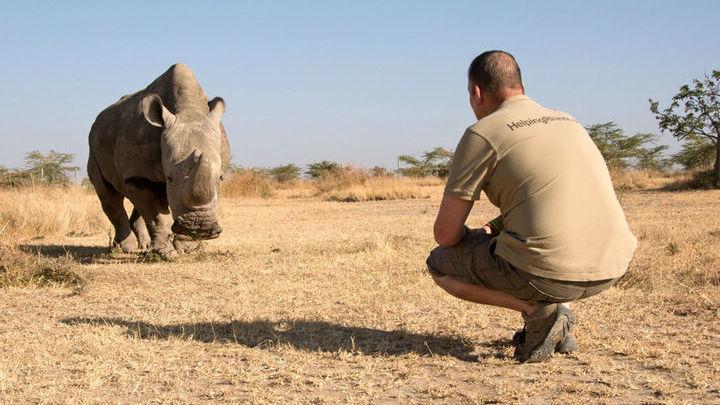 Теперь в мире осталось всего две самки северного белого носорога.