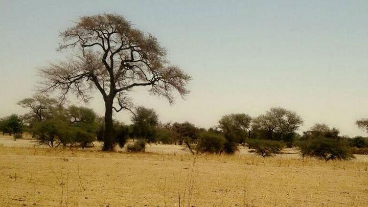 Частично в увеличении Сахары виновато изменение климата.