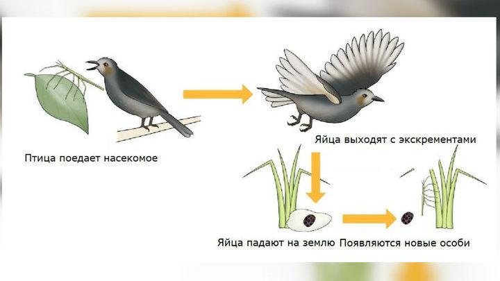 Пока подобный способ расселения насекомых считается гипотетическим. Доказать его существование √ дело генетиков.
