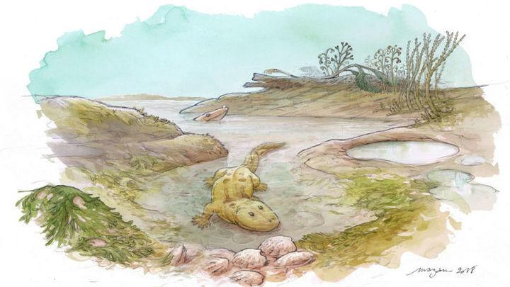 Судя по всему, ихтиостеги чувствовали себя комфортно не только в солёной, но и в пресной воде.