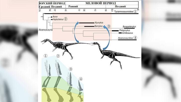 Эволюционная история альваресзавров и сравнительная анатомия их передних конечностей.