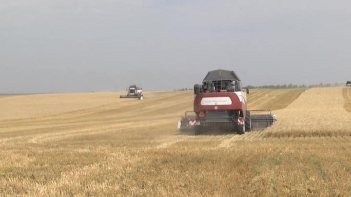 Цена на экспортную пшеницу превысила 300 долларов за тонну
