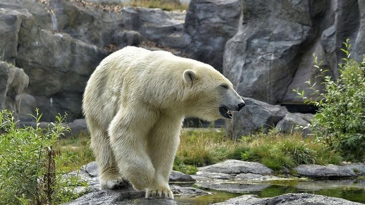 В зоопарке Екатеринбурга умер медведь, проглотивший мяч