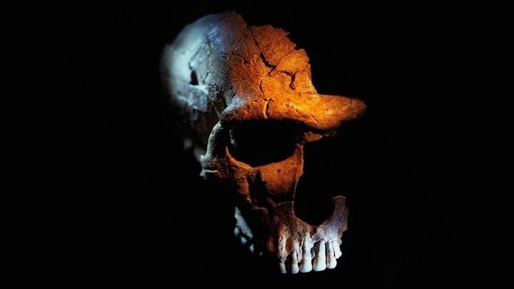 Череп неандертальца со следами повреждений.