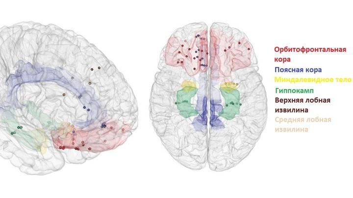 В формировании настроения задействованы сразу несколько участков человеческого мозга.