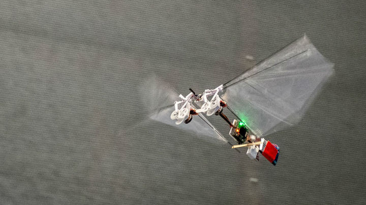 Дрон тяжелее плодовой мушки в 55 раз, но успешно имитирует аэродинамику её полёта.