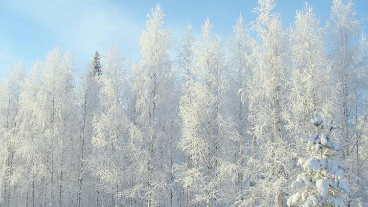 Тамбовская область стала лидером экологического рейтинга по итогам зимы