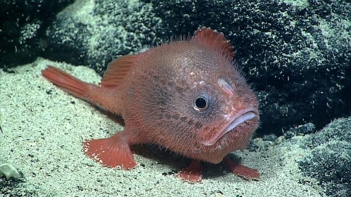 """Учёные полагают, что """"задержка дыхания"""" помогает рыбам экономить энергию."""